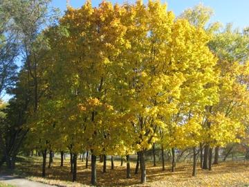 Herbst in Wischgorod